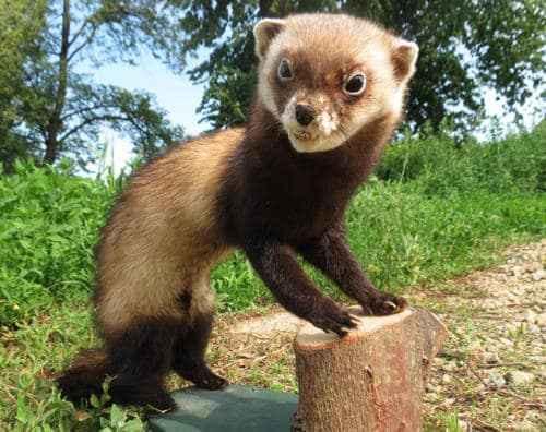 Животный и растительный мир лесостепи - характеристика, список, названия и фото 12