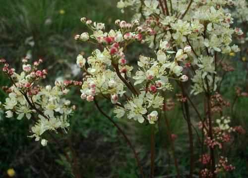 Животный и растительный мир лесостепи - характеристика, список, названия и фото 18