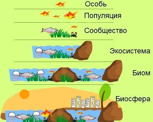 Экологическая система: понятие, суть, типы и уровни 6