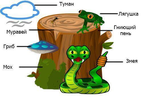 Экологическая система: понятие, суть, типы и уровни 3