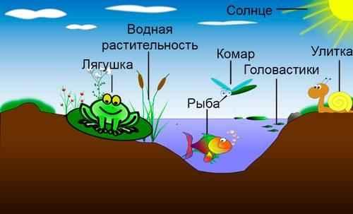 Пирамида уровней организации жизни на Земле: от атомов до биосферы 5