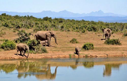 Природные ресурсы Африки 2