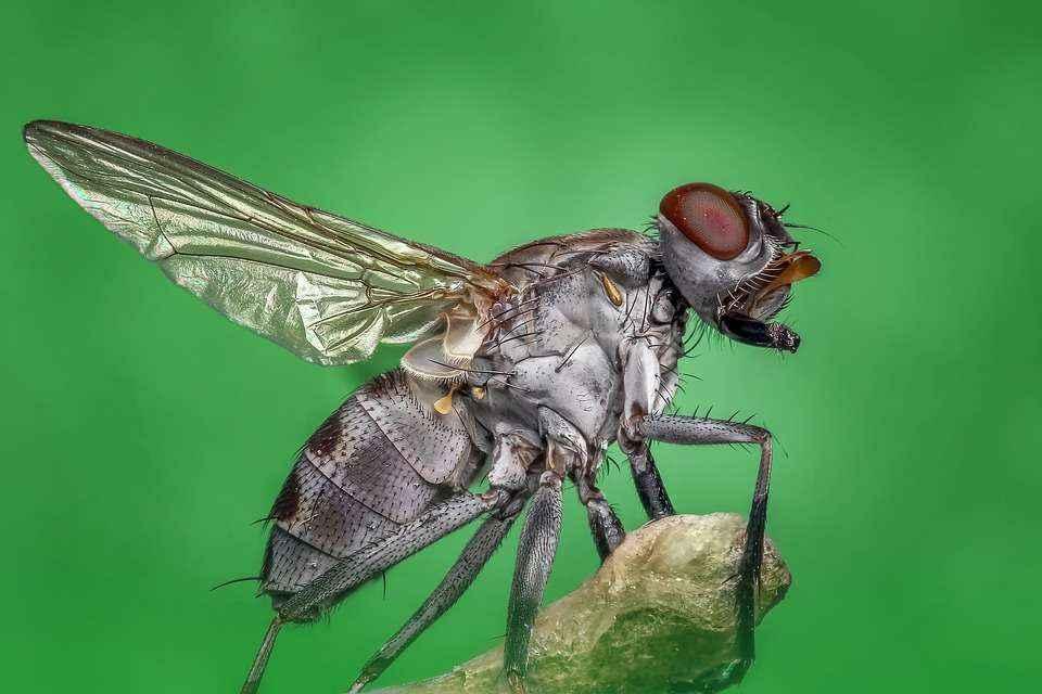 ТОП 10 интересных фактов о комнатных мухах