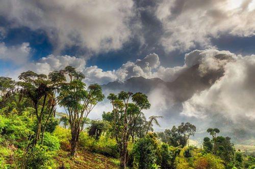 Природные ресурсы Африки 3