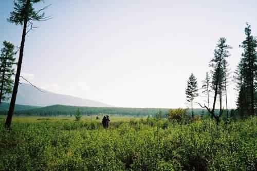 Описание и особенности природной зоны тайги 5