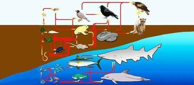 Отличие пищевой цепи от пищевой сети в экосистеме 7