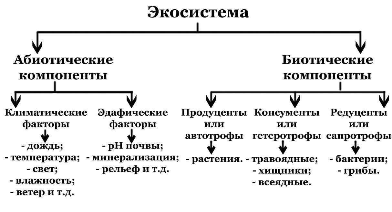 Экологическая система: понятие, суть, типы и уровни 5