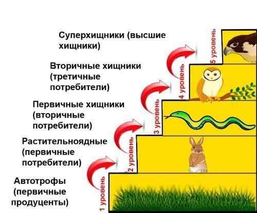 Отличие пищевой цепи от пищевой сети в экосистеме 5