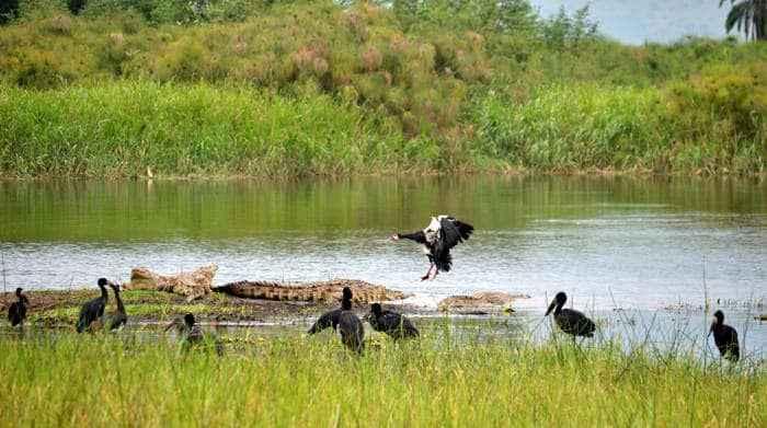 Общие понятия об экологии экосистемах и экологических факторах