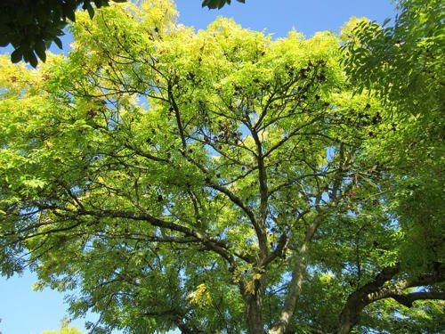 Животный и растительный мир лесостепи - характеристика, список, названия и фото 17