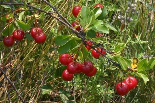 Растительный мир Свердловской области - список, характеристика и фото 5