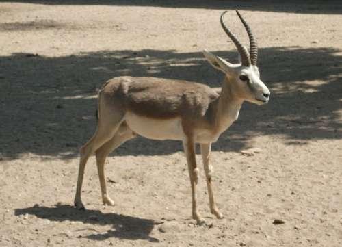 Какие животные обитают в Казахстане? 13