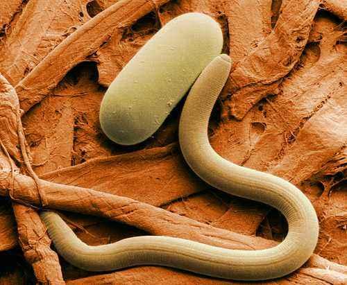 Организмы обитающие в почве: животный мир, бактерии, грибы и водоросли 2