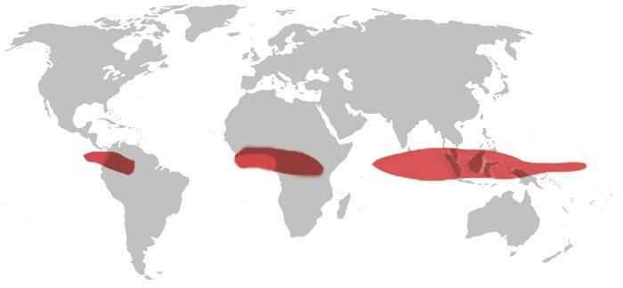 География Африки: геология, климат, пустыни, водоемы, природные ресурсы и экология 6