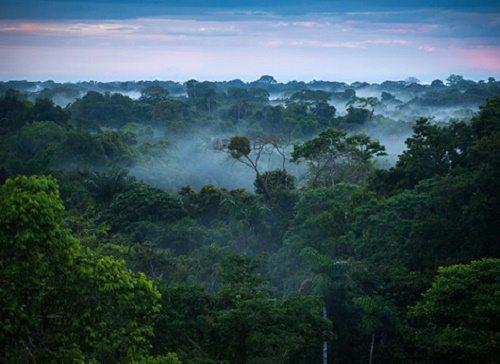 Какие животные обитают в лесах - названия, фото и описание 3