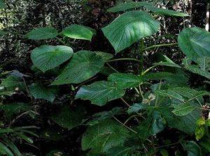 Характеристика растительного мира Австралии 7
