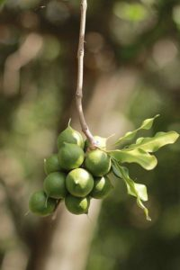 Характеристика растительного мира Австралии 12