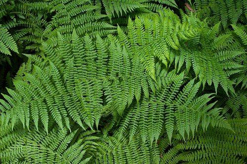 Этапы эволюции растительного мира 3