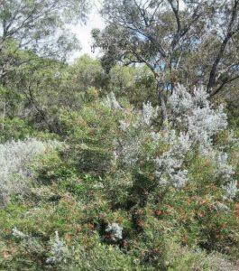Характеристика растительного мира Австралии 8