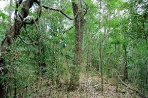 Растительный мир Азии: описание, названия и фото 3