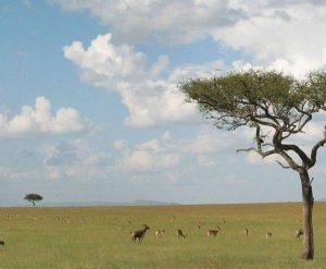 Растения Африки: характеристика, примеры, описание и фото 7