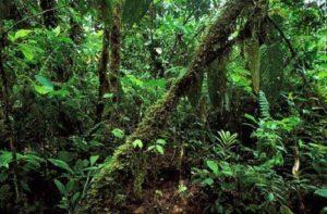 Растительный мир Азии: описание, названия и фото 2