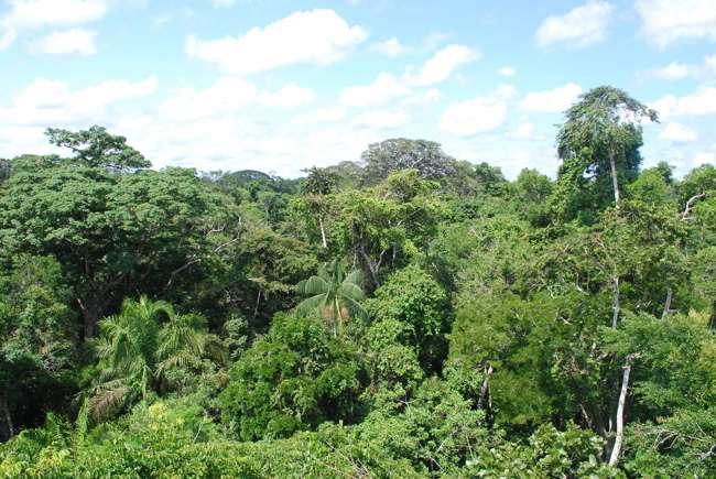 География Южной Америки: геология, климат, пустыни, водоемы, природные ресурсы и экология 9