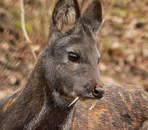 Какие животные обитают в Казахстане? 6