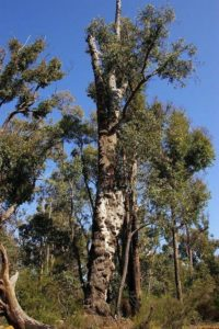 Характеристика растительного мира Австралии 3