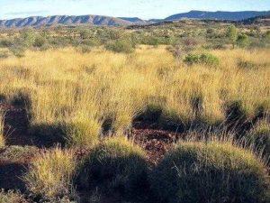 Характеристика растительного мира Австралии 11