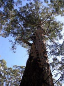 Характеристика растительного мира Австралии 2