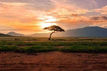 Африка, природа, саванна, растения, флора, трава, деревья
