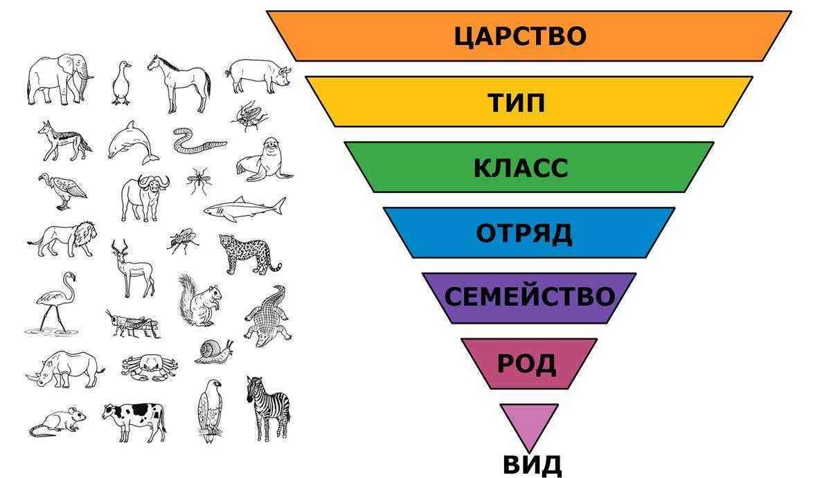Фауна это животный мир