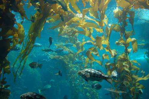 Определение и примеры морских экосистем 2