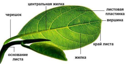Особенности строения и структура растений 7