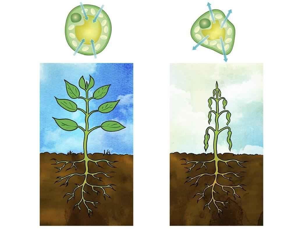 Как и где происходит процесс фотосинтеза у растений? 12