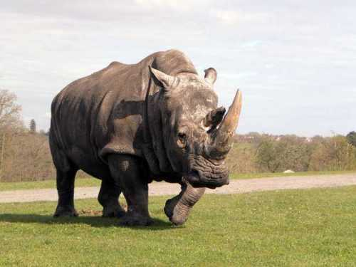 Какие виды животных самые крупные на Земле - список, характеристика и фото 8