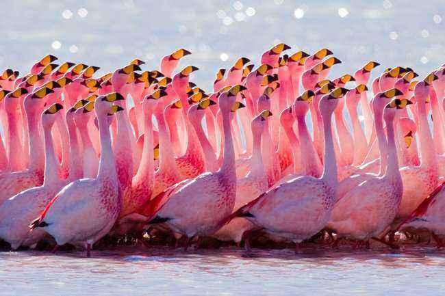 Отряды класса птиц - список, названия, фото и краткое описание 28