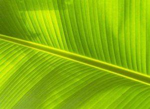 Хлоропласты: роль в процессе фотосинтеза и структура 3
