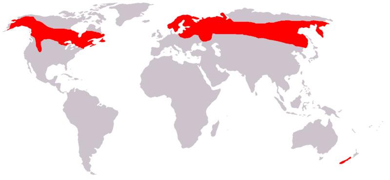 Где живет лось: материк, среда обитания и карта? 2