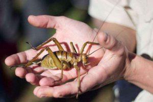 Какое насекомое самое крупное на Земле? 4