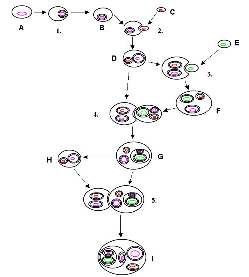 Процесс эволюции животных, или история развития фауны на Земле 2