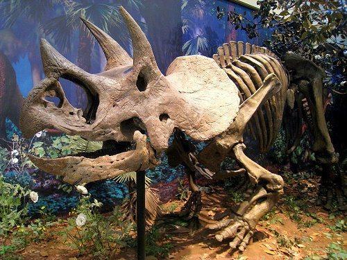Процесс эволюции животных, или история развития фауны на Земле 18