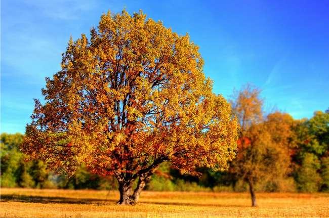 Доклад на тему осень золотая 2958
