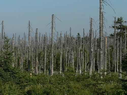Виды, источники и причины загрязнения окружающей природной среды 2