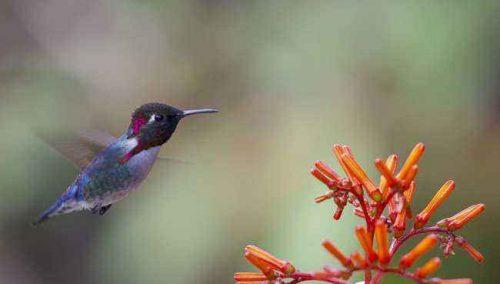Какие виды животных самые маленькие на Земле - список, характеристика и фото 3