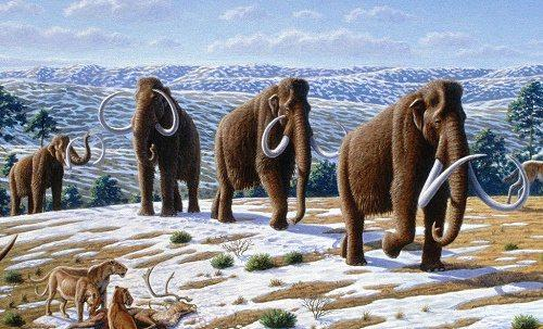 Процесс эволюции животных, или история развития фауны на Земле 24