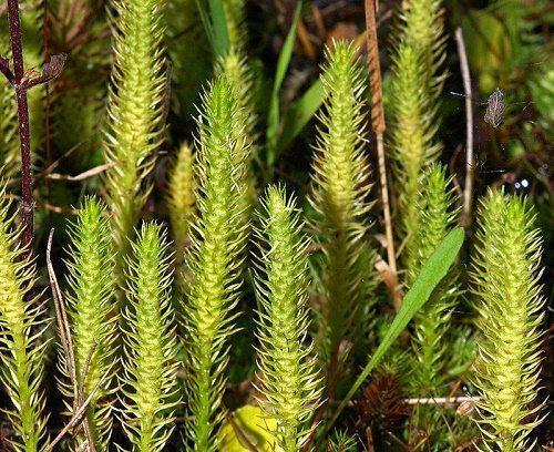 Этапы эволюции растительного мира 4