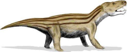 Процесс эволюции животных, или история развития фауны на Земле 20