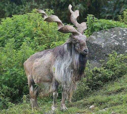 Фото и описание самых странных и необыкновенных животных мира 13
